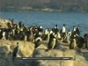Pingüinos de la Patagonia